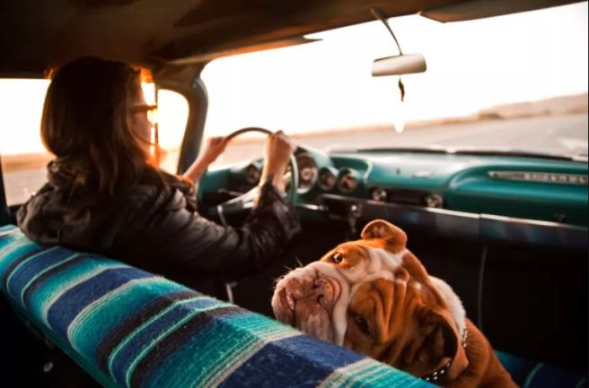Woman and a dog in a car.